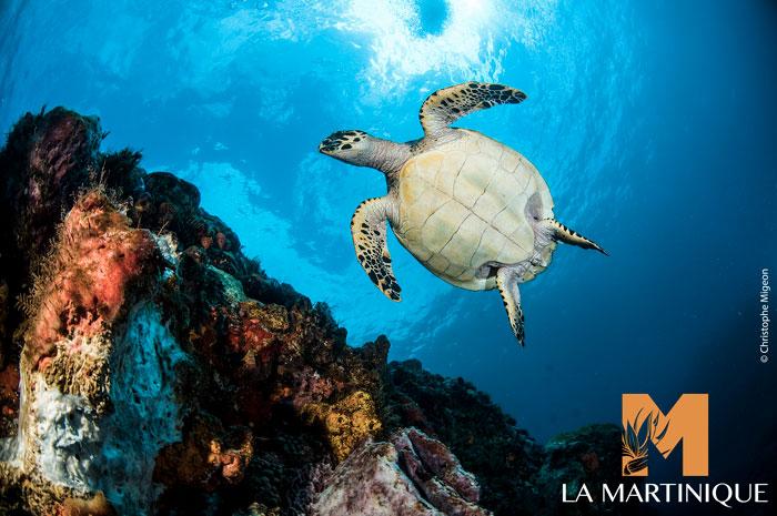 Explorez les fonds marins martiniquais for Les fonds des photos