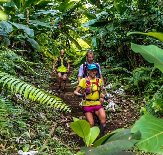 Martinique nature